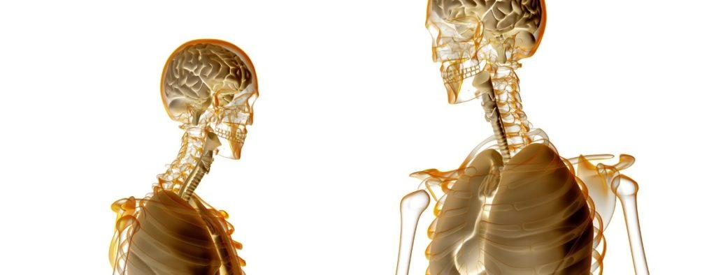 Correlazioni tra occlusione e postura